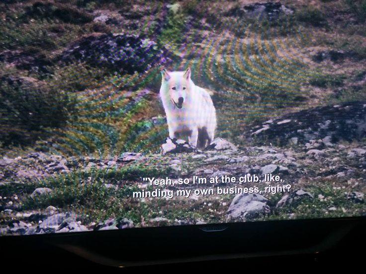 Netflix Glitch Combines Aziz Ansari Subtitles With Popular BBC Nature Series from Best ...