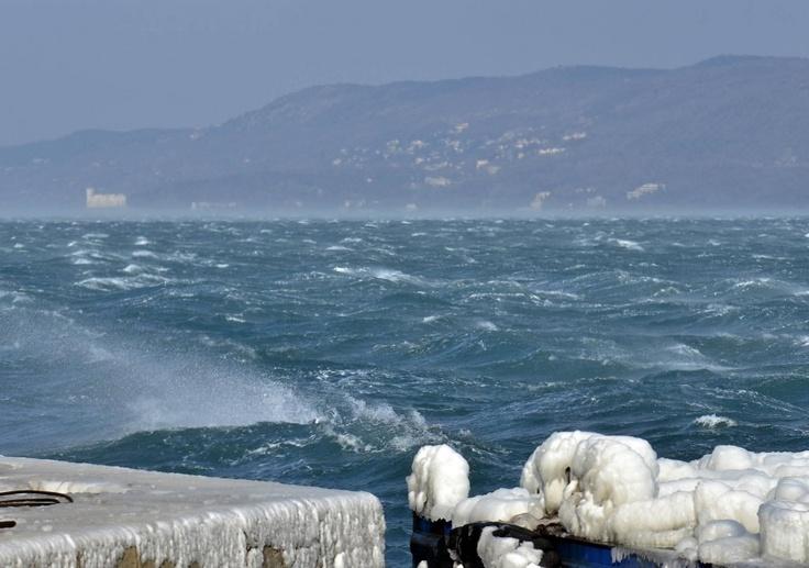 Inverno 2012 a Trieste, il mare si è ghiacciato ed i pesci sono morti, così tante persone sono corse a prendere i pesci con le mani, anche io e quanti bei pranzi abbiamo fatto con gli amici.  Le foto di Giovanni Montenero. http://bora.la/wp-content/uploads/2012/02/ghiaccio-bora-sullo-sfondo-miramare1.jpg & http://bora.la/wp-content/uploads/2012/02/ghiaccio-bora-trieste.jpg (Grazie Margherita)