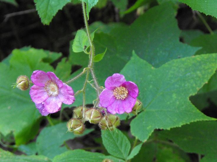 http://scribenet.hubpages.com/hub/Ontario-Wildflowers-Part-3