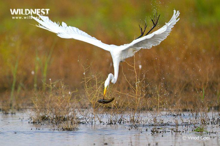 Birding near Delhi at Basai Wetlands near Gurgaon
