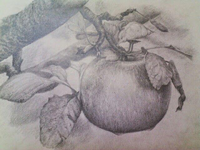 Manzana (lápiz de grafito )