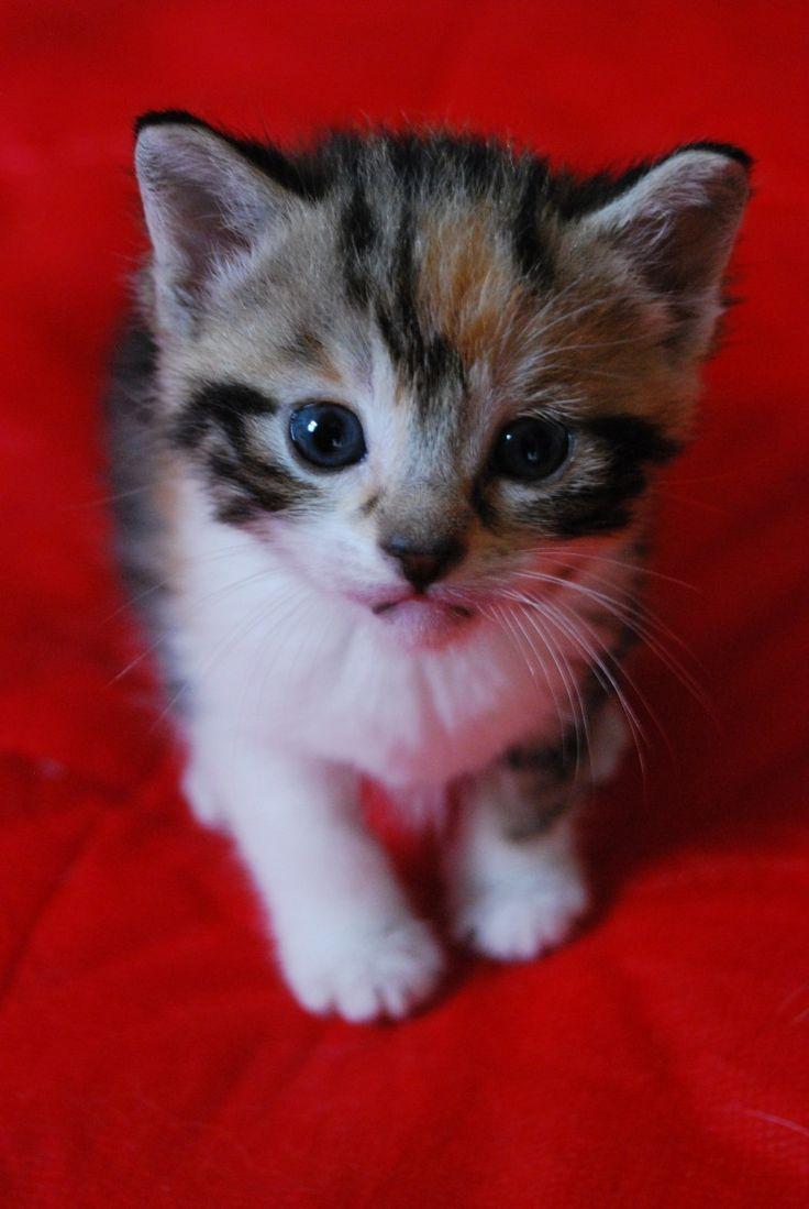 Rest in peace, Whiskers - www.ladybirdanimalsanctuary.com
