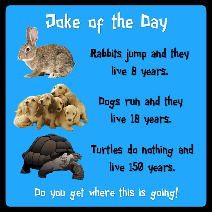 Rabbits jump and they live 8 years. Dogs run and they live 18 years. Turtles do nothing and live 150 years.