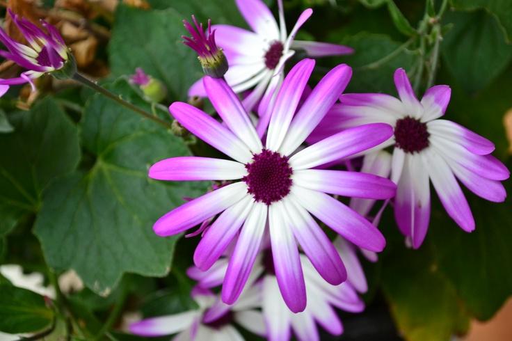 Beautiful Flower: Beautiful Flower