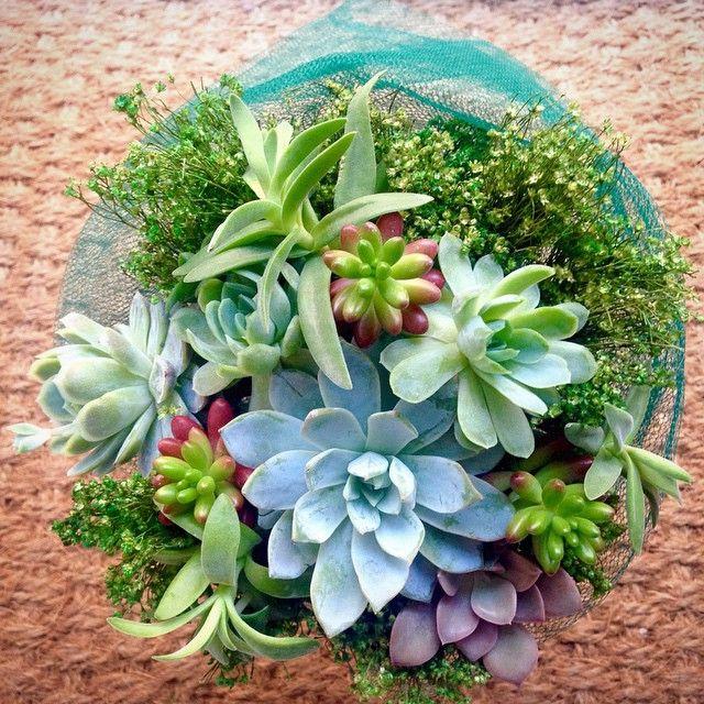 Bir buket sukulent  A succulent bouquet #terraquadesign #istanbul #green #cactuslove #succulove #succulent #sedum #buket #bouquet #sukulent #plant #plantdesign #Echeveria #plantshop #flower #florist #floraldesign #lovegreen