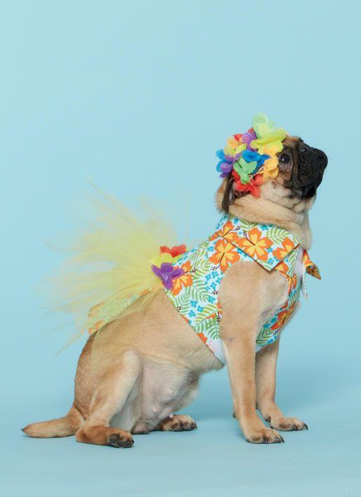 32 besten Pet Patterns Bilder auf Pinterest | Schnittmuster, Große ...