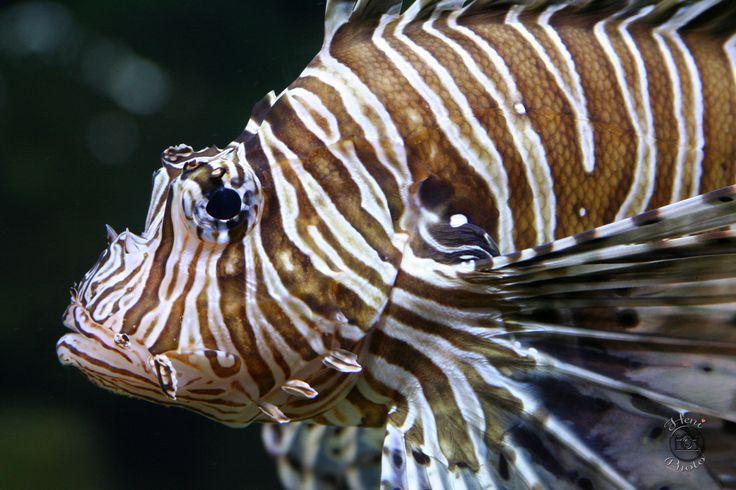 Tűskés hal