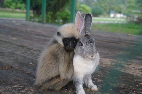 cute little monkey and bunny are friends