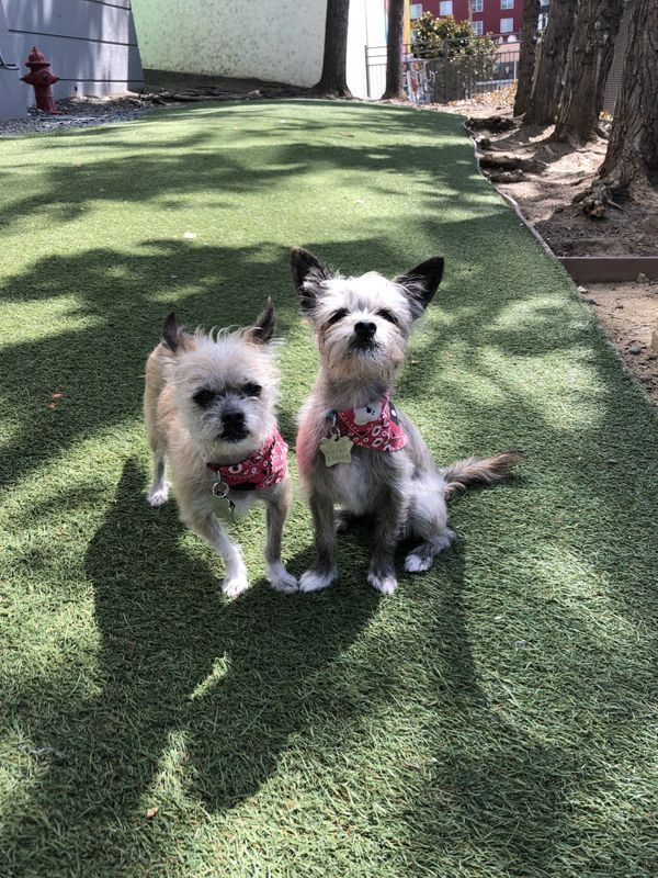 Exciting News Bay Area Pups And Hoomans We Ll Be At Tails And Ales Supporting The Humane Society Silicon Valley On Saturday Oct Humane Society Dog Bandana Pup