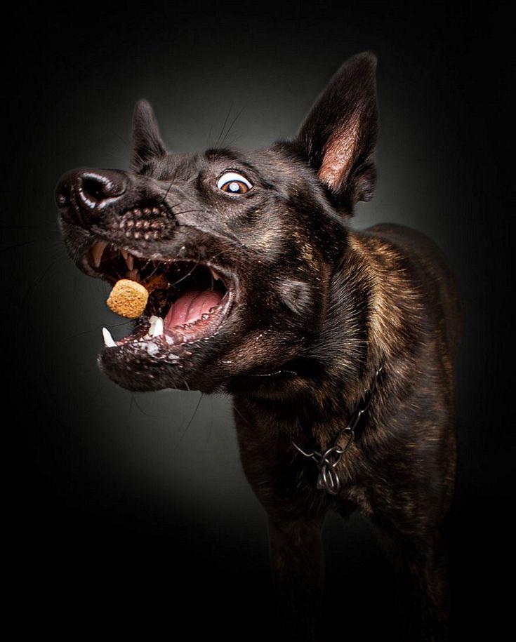 Divertidas fotografias de cães pegando comida no ar - O fotógrafo Christian Vieler, capturou o momento exato de cães pegando comida no ar. O resultado é bem divertido. Confira!