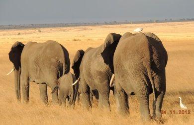 3 days 2 nights safari tour from mombasa and Kenya Coast beach hotels.    Kenya holiday safari tour visiting the red soiled plains of the Tsavo East National Park and the Amboseli National park at the floor of Mount Kilimanjaro.  http://www.naturaltoursandsafaris.com/mombasa_kenya_safaris.php