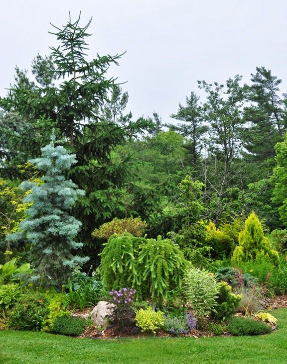 50 best inspiration evergreen images – Evergreen Garden Plans