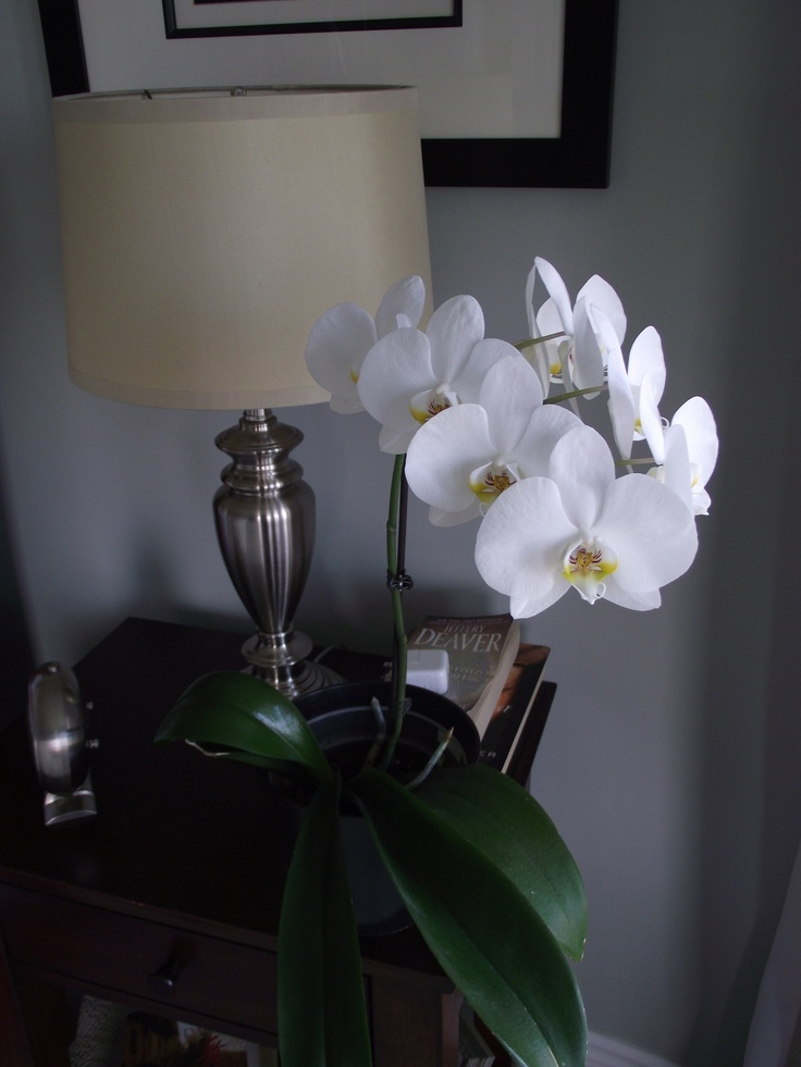 No. 10 Currently blooming since Sept 2012 #orchids #home