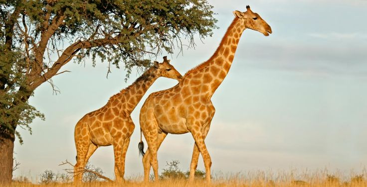 The Vibrant Nairobi.The most famous is the Nairobi National Park. Cheap Flights to Nairobi. http://www.traveltrolley.co.uk