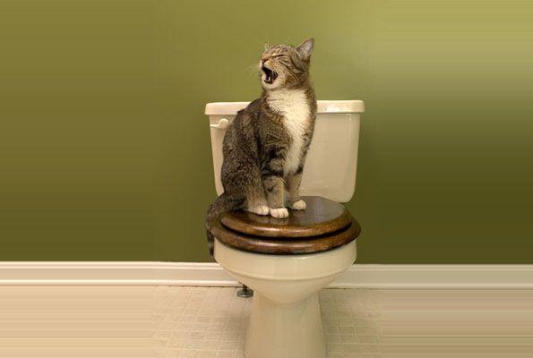 Stress ist bekanntermaßen eine Zivilisationskrankheit, die einen Zwilling hat: Frust. Und davor sind auch so hochentwickelte Tiere wie Katzen nicht gefeit. Wir legen uns ein Magengeschwür zu, Katzen werden manchmal aggressiv, in den meisten Fällen jedoch unsauber. Aber nicht jede Hinterlassenschaft, die daneben geht, basiert auf einer seelischen Störung.