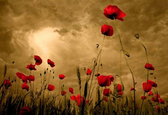 Deeper Story :: Lest We Forget, Remembrance Day. We will remember them #remember…