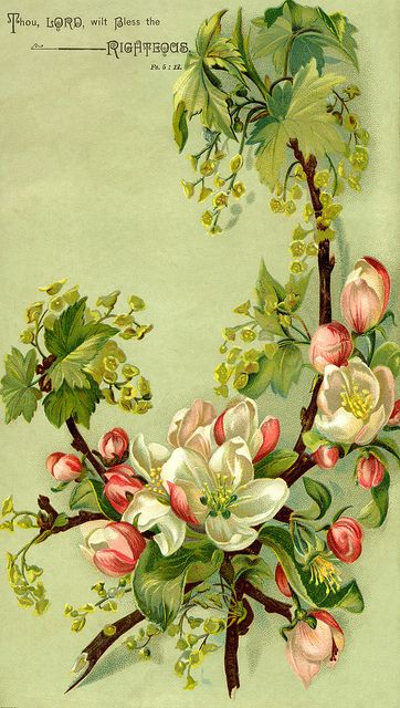 Love vintage art! Cherry Blossom