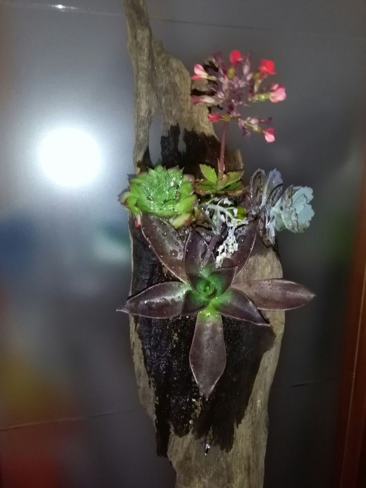 Suculentas en tronco