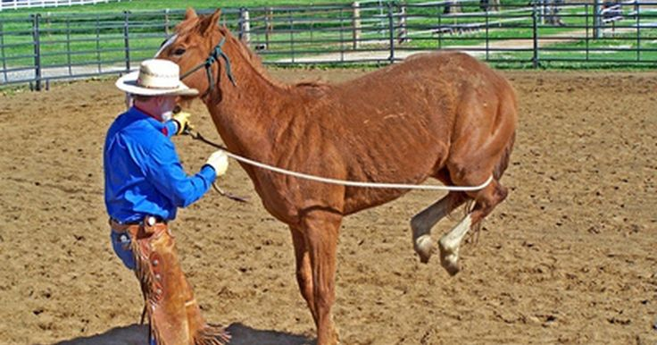 Cómo hacer chaparreras vaqueras de tela de vaquero azul. Los jinetes del oeste comenzaron a usar las chaparreras para proteger sus pantalones de inconvenientes con el cuero del animal. En las zonas del norte, las chaparreras cubren toda la pierna y se utilizan para retener el calor. Estos accesorios son ahora muy populares entre los que montan caballos y motocicletas. Pueden ser muy caras para ...