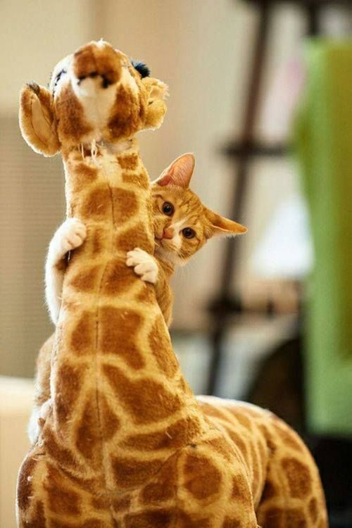 """lolcuteanimals:  """"What? He's my friend.  """""""