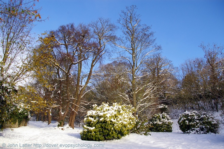 """The Victorian Zig Zags Park under Snow, Dover, Kent, England, UK. A new Castle Hill Road was built in 1799, old one (stage-coach route) converted into Zig-Zags walk, """"ornamented with trees and shrubs"""", when John Adcock first became mayor in 1885. Devastated by 1987 hurricane. Right: Dover Castle. In front: Connaught Park. Behind: Laureston Place and Victoria Park.  Winter (December 2010): Dover History, Parks and Gardens, Trees, Nature and Landscape. See…"""