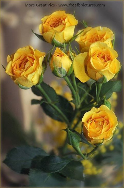 There Is A Beautiful Yellow Roses With Sepals And Leaves.these All Roses Were Trying To Blooming And One Of Them Was Also Bud.