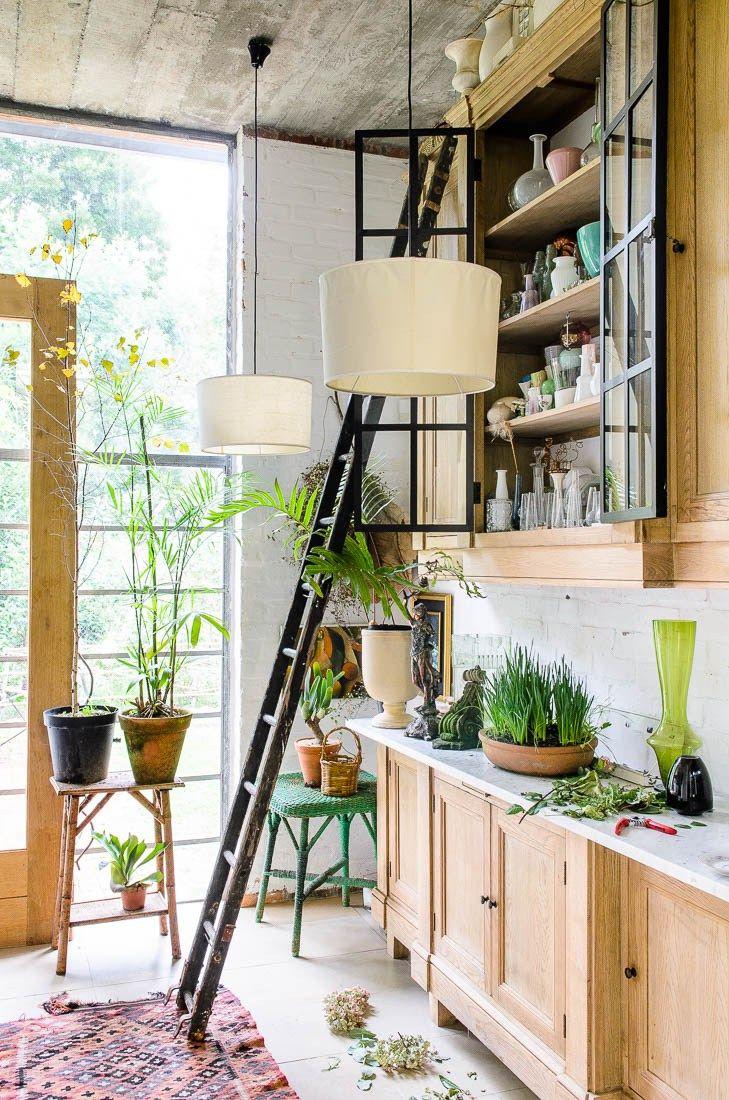 40 best design plantas plants images on pinterest