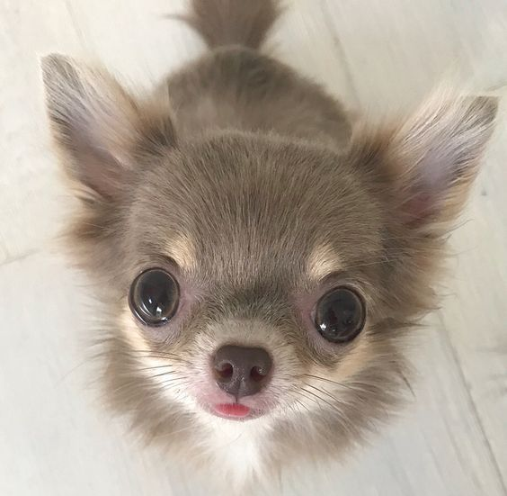 Top 5 Healthiest Dog Breeds Top Dog Breeds Healthiest Dog