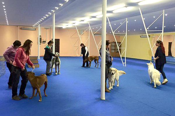 Multicentrum DOG Academy, kurz handlingu, www.vip-pets.cz