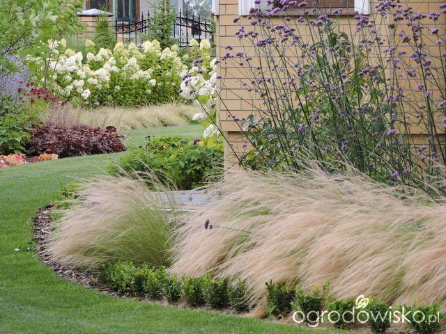 Zielonej ogrodniczki marzenie o zielonym ogrodzie - strona 800 - Forum ogrodnicze - Ogrodowisko