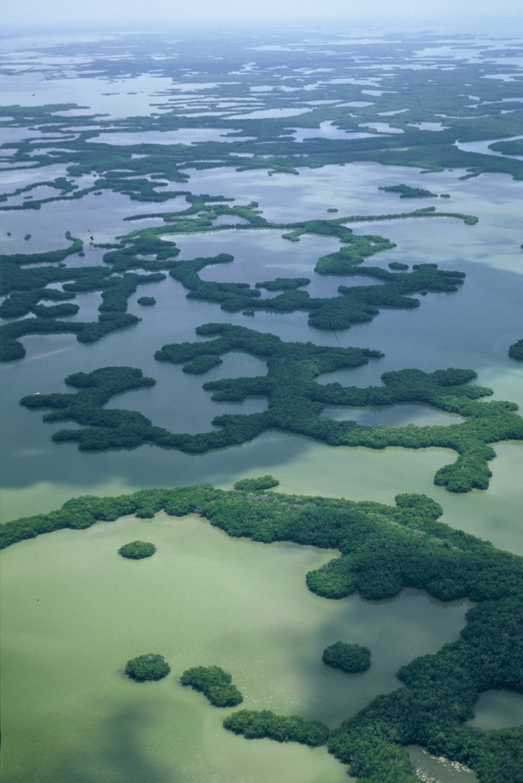 Ten Thousand Islands in the Everglades protects important mangrove habitats and a rich diversity of native wildlife, including several endangered species.