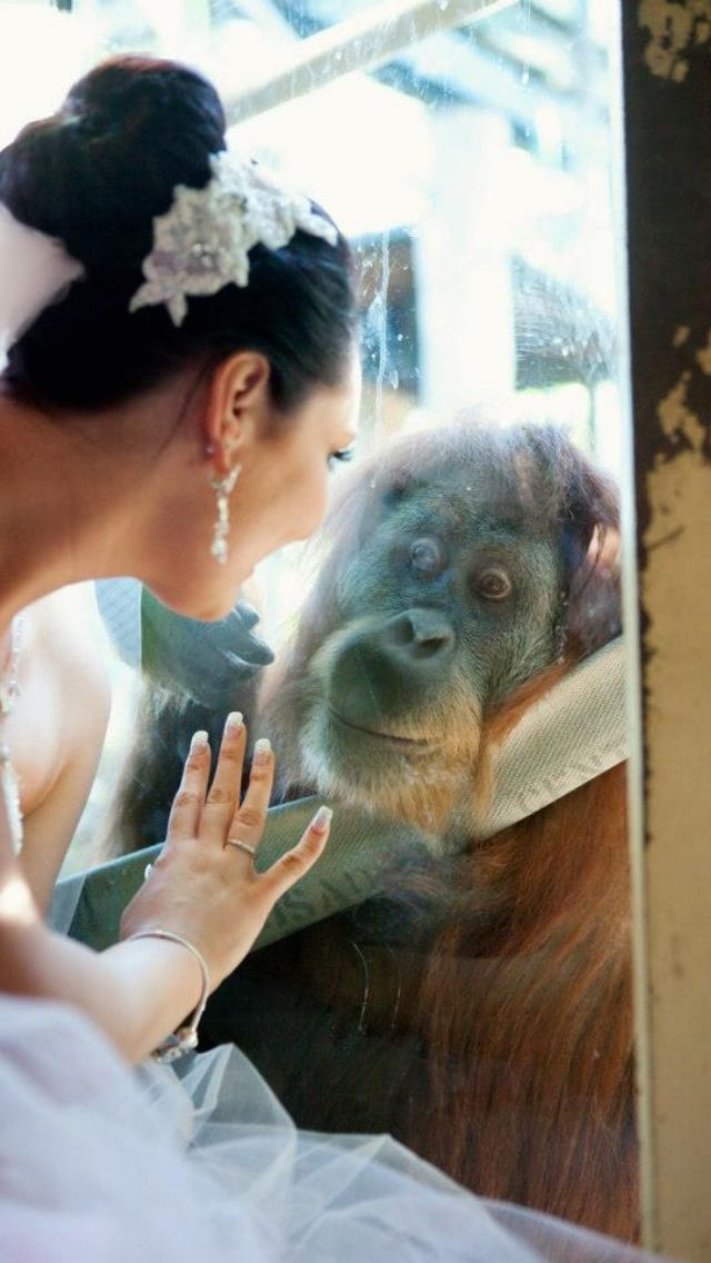 1000 images about zoo weddings on pinterest zoos