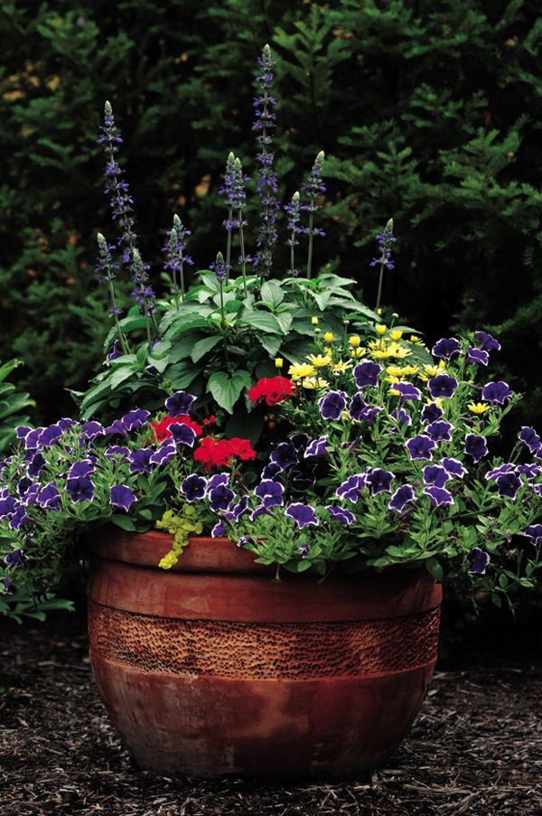 Awesome Geranium Plant Compositions | outdoortheme.com