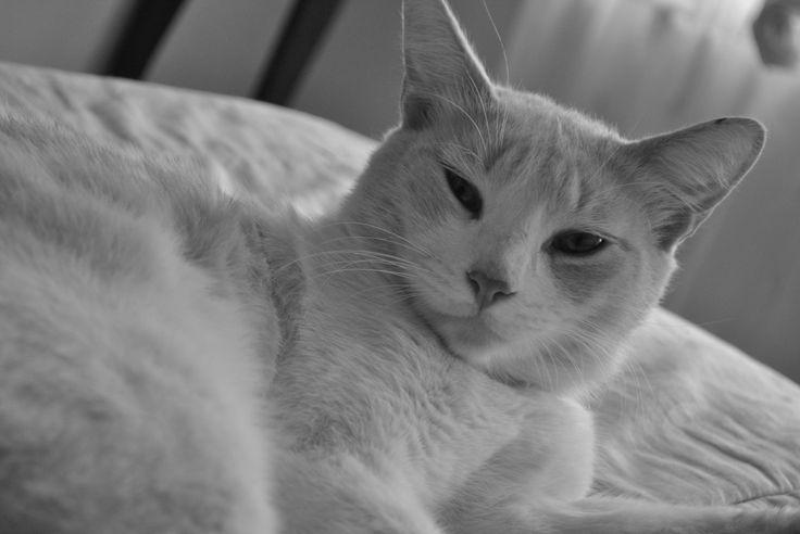 Un gato o gatito necesita ciertas cosas como juguetes, una camita, un rascador de uñas (bueno, este lo necesitamos más nosotros, porque el gatito no tiene ningún inconveniente de afilárselas sobre nuestro sillón preferido), etc.