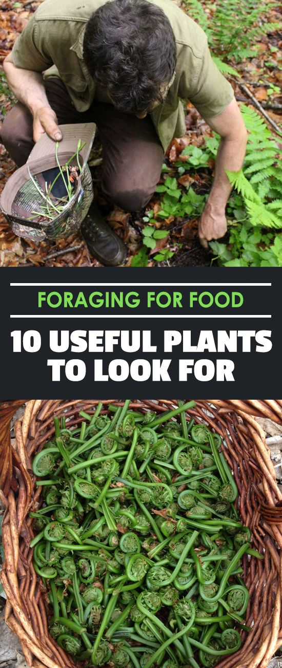 Foraging for food can be a lot of fun...if you know what you're looking for. Forage for these ten plants and add them to your diet!