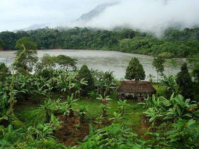 Tropical plants, greenery, unity