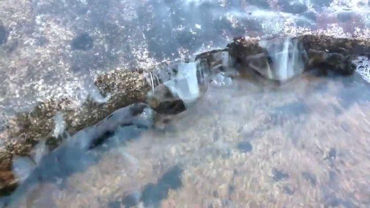 Silokallio veden vallassa