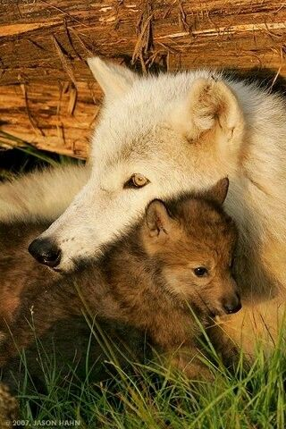 25+ best ideas about Wolf name on Pinterest | Names that ...