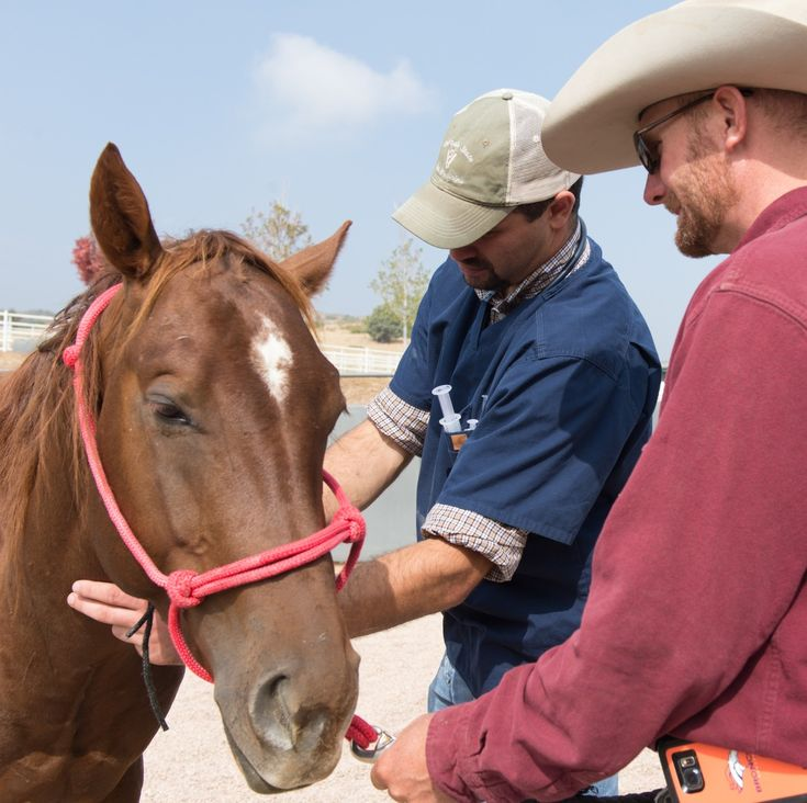 233 best Horses and Education images on Pinterest Horses, Horse - equine veterinary nurse sample resume