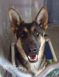 A4824206 I Am An Extremely Sweet 10 Month Old Female Black Tan