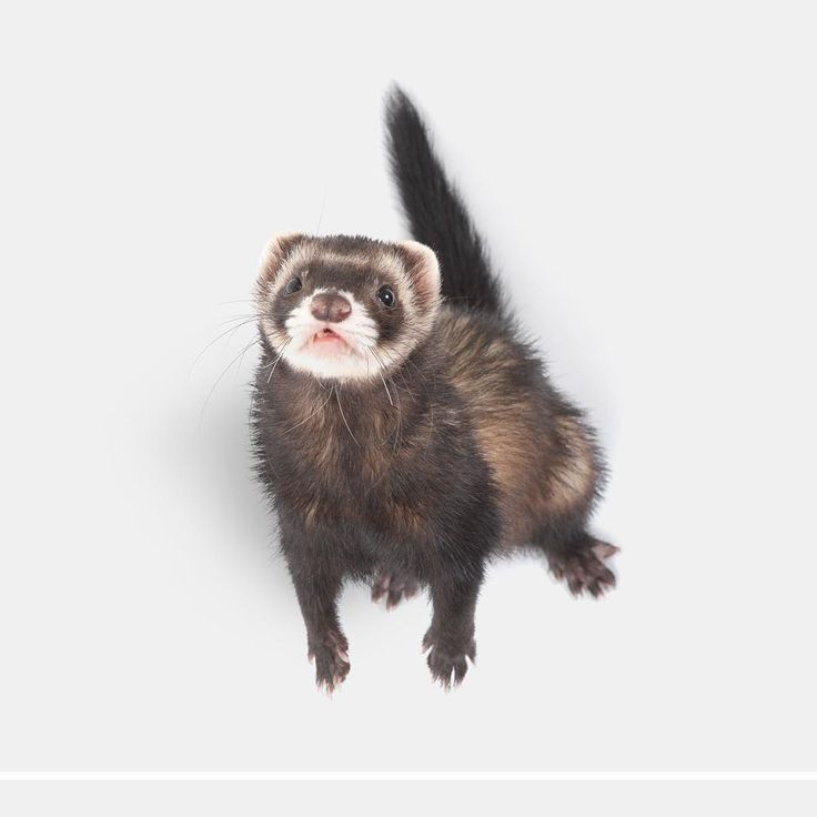 See this Instagram photo by @the.modern.ferret • 374 likes