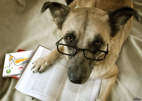 Exams period is getting closer, so everybody put your glasses back on and open your books!