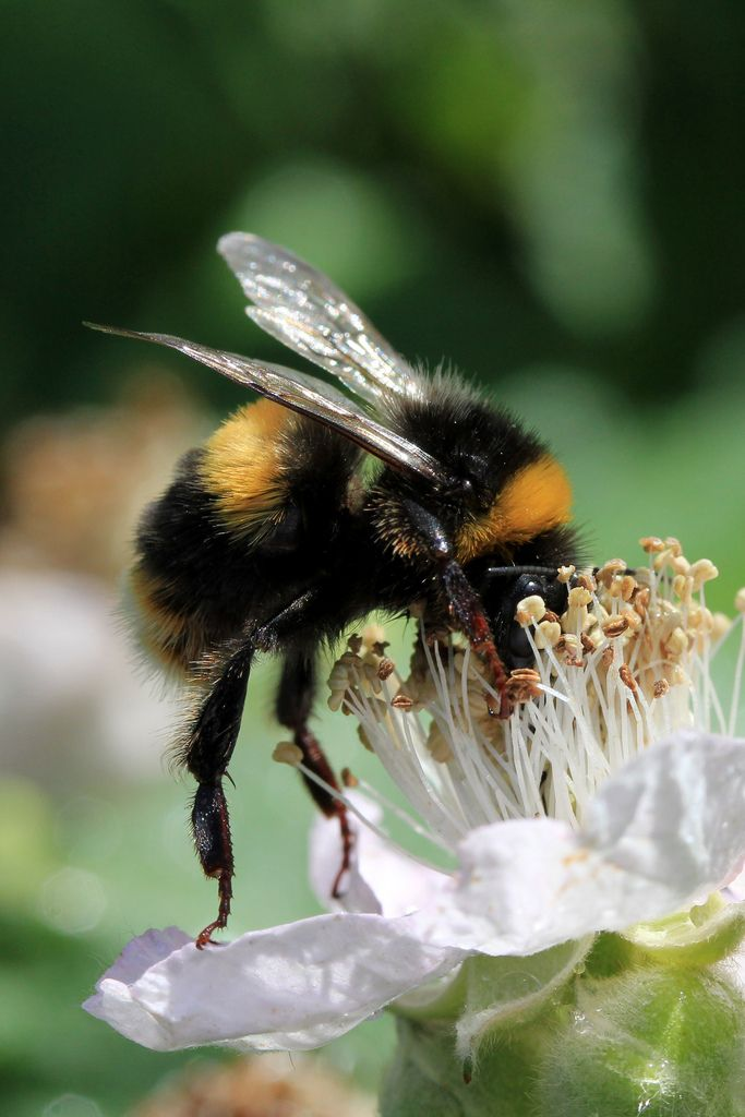 ˚Bumble Bee