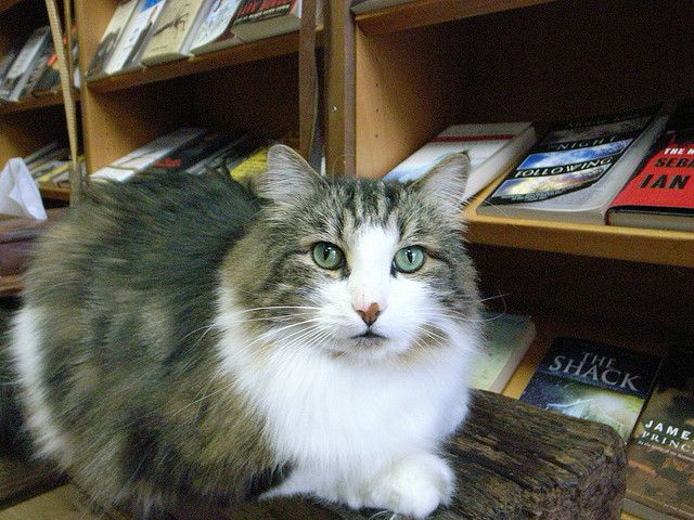 Book Cat Store by Evil Daikon, via Flickr