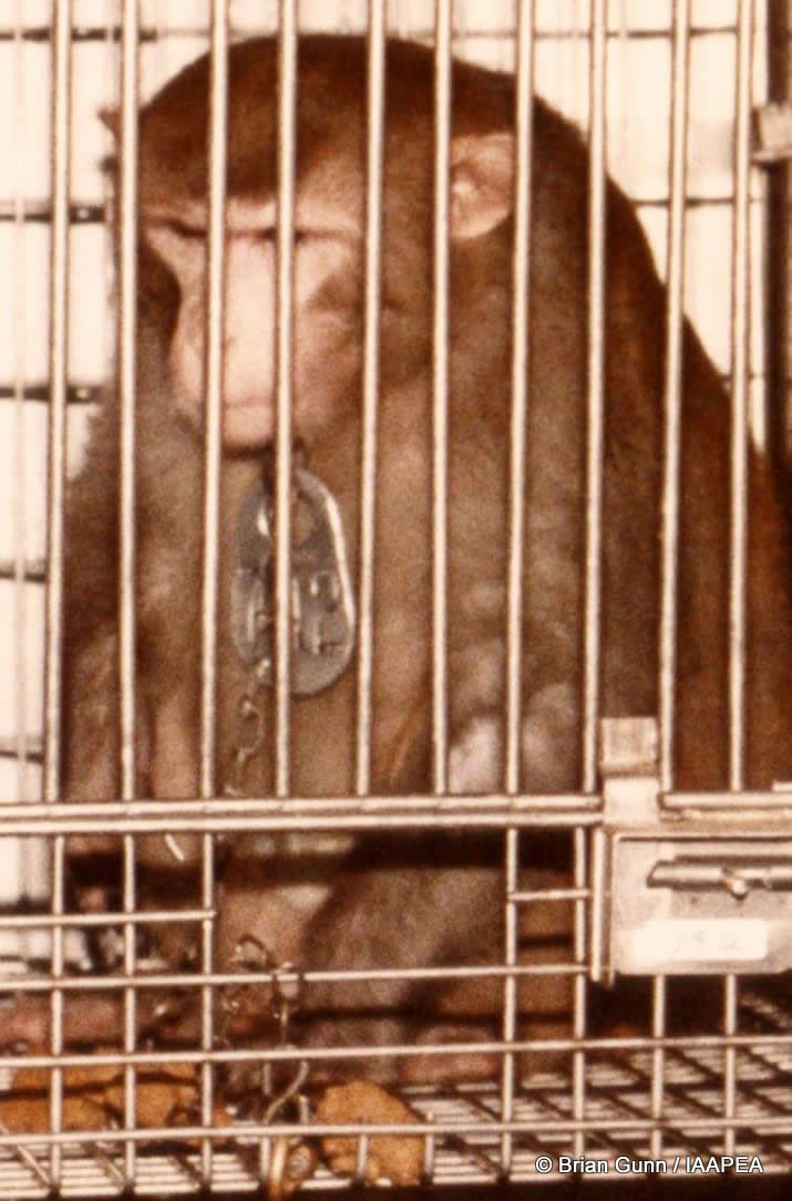 A look at the animals in the research laboratories