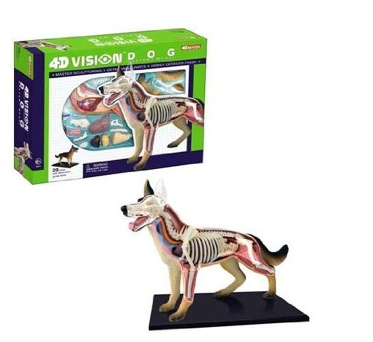 Dogs Anatomy Biology 4D Vision Dog Skeletal System Veterinarian Education Toys #TEDCO