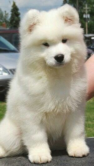 I want a dog like this!!!