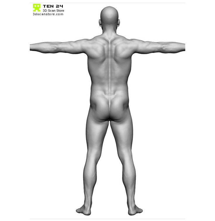 73 best Anatomy Male images on Pinterest   Menschliche anatomie ...