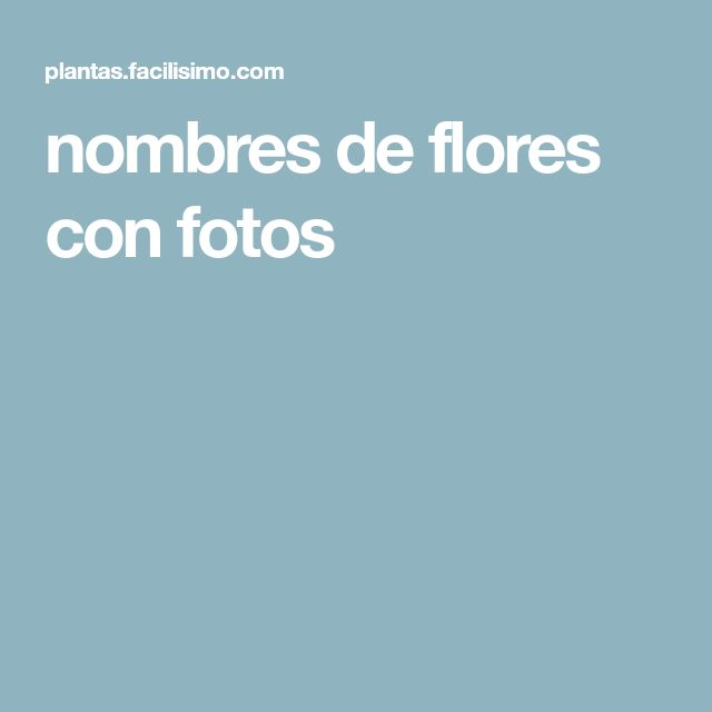 nombres de flores con fotos