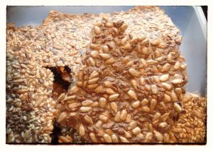 image of seed crisp without sesame seeds